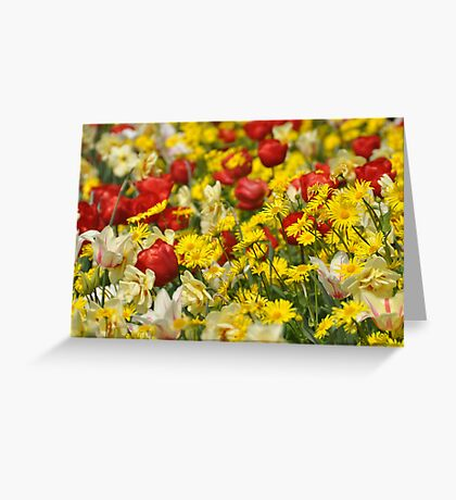 A riot of colour Greeting Card