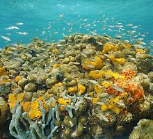 Colorful coral reef with sponge and school of fish by Dam - www.seaphotoart.com