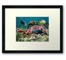 Colorful coral reef and tropical fish Framed Print