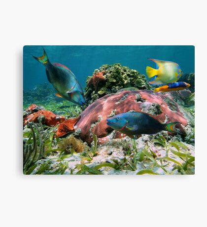 Colorful coral reef and tropical fish Canvas Print