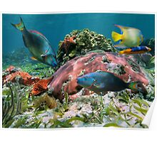 Colorful coral reef and tropical fish Poster