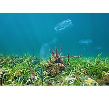 Colorful marine life on seabed with moon jellyfish Photographic Print