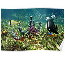 Colorful fish and marine life underwater Poster