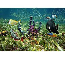 Colorful fish and marine life underwater Photographic Print