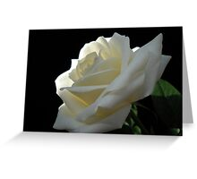 Single White Rose. Greeting Card