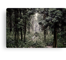 A secret path Canvas Print