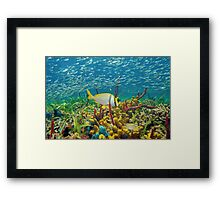 Colorful sea life underwater with shoal of fish Framed Print