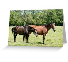 Buddies -Joy and Regal  NNEP Ottawa, On Greeting Card
