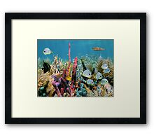 Coral reef with colorful sponges and tropical fish Framed Print