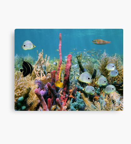Coral reef with colorful sponges and tropical fish Canvas Print