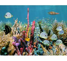 Coral reef with colorful sponges and tropical fish Photographic Print