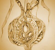 Floribunda bulbus by Helena Wilsen - Saunders