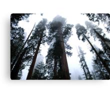 Sequoia II Canvas Print