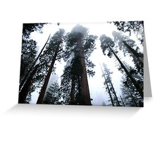 Sequoia II Greeting Card