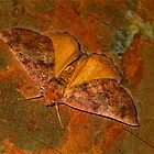 A Moth Hiding in the Open by haymelter