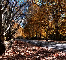 Mount Wilson - Main Road - Blue Mountains  by Bill Fonseca