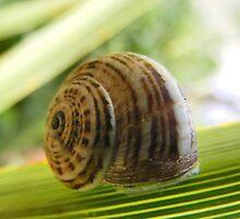 Sleeping Snail by Roxanne du Preez