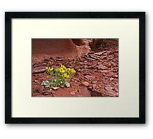 Tough Desert Flower Framed Print