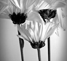 The Daisy Trinity by Gretchen Dunham