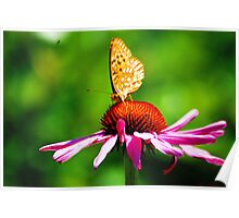 Fritillary on Echinacea Poster