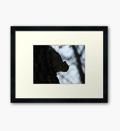 Furry Forest Friend Framed Print