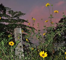 Evening Flowers by Rena Neal