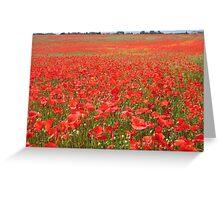 Local poppy field Greeting Card
