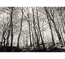 Clyne Woods Photographic Print