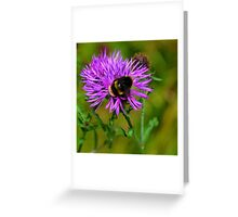 Bumble Bee on flower..... Greeting Card