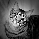 Cat Portrait by Amber  Lavallee
