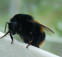 Little Bee by SophieSimone
