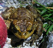 Frog at Night by SophieSimone