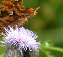 Comma Butterfly, Lyme Dorset UK Sticker