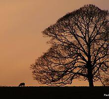 Lost Sheep by Paula Walker