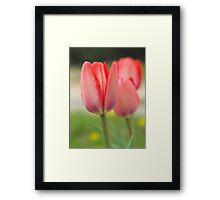Three Rosey Tulips Framed Print
