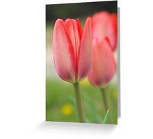 Three Rosey Tulips Greeting Card