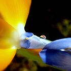 Bird of Paradise and its drop water by Catarina51