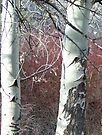 Aspens and Red Osier Dogwood by Betty  Town Duncan
