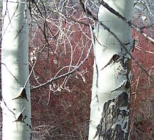 Aspens and Red Osier Dogwood by © Betty E Duncan ~ Blue Mountain Blessings Photography