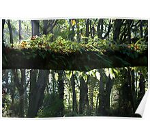 Tree Branch with Ferns and Moss and Slanted Sunlight Poster