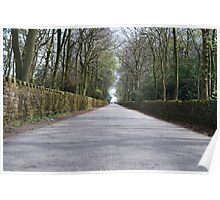 Tree Lined Avenue Poster