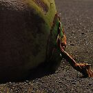 Coconut at the Shore by Diana Forgione