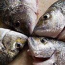 Fish face by Anna D'Accione
