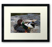 Duck Yoga Framed Print