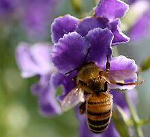 Bee #2 by Jodie Bennett