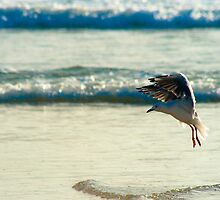 Wings of Freedom I by Ivan Cunha