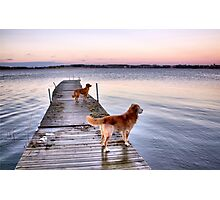 Sunset dogs Photographic Print