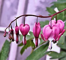 Hearts on a String by jeanniechris