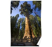 The Largest Tree in the World Poster