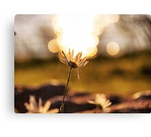 Holding up the sky Canvas Print